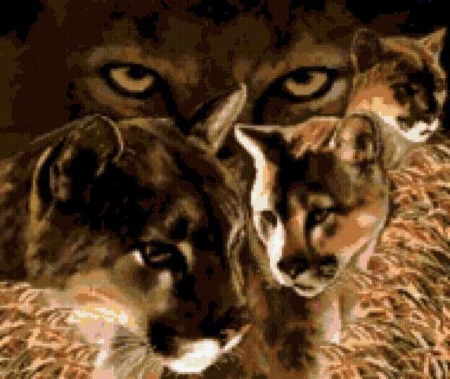 Взгляд пумы, предпросмотр