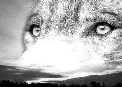 Схема волка монохром