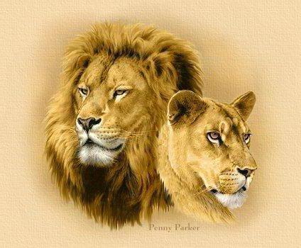 картинки львицы и льва