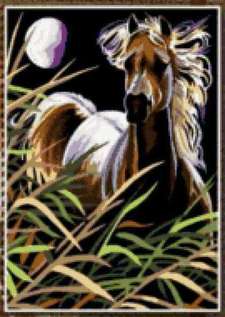Ночной конь , конь, животные,