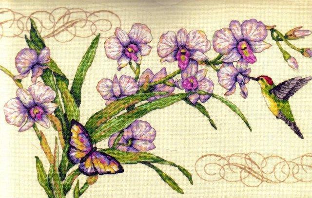 Орхидеи, колибри и бабочка,