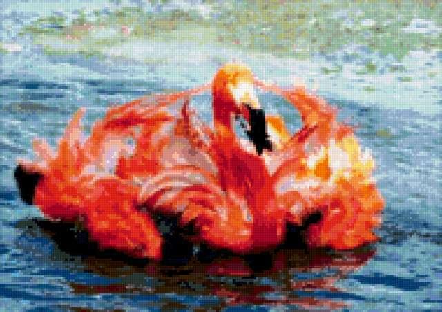 Фламинго на воде, предпросмотр