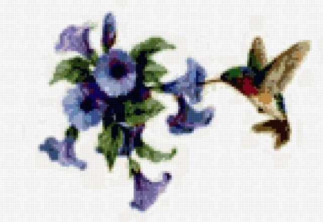Колибри, картина, райские
