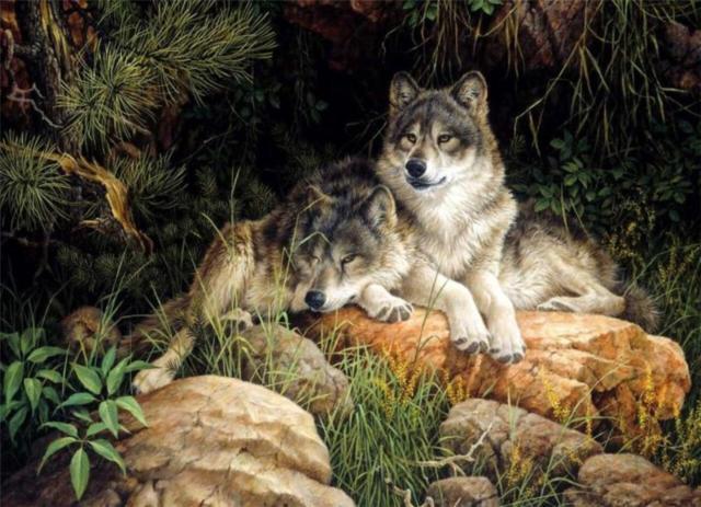 Волки, волки, животные, волк,