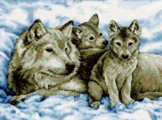 Семья волков, предпросмотр