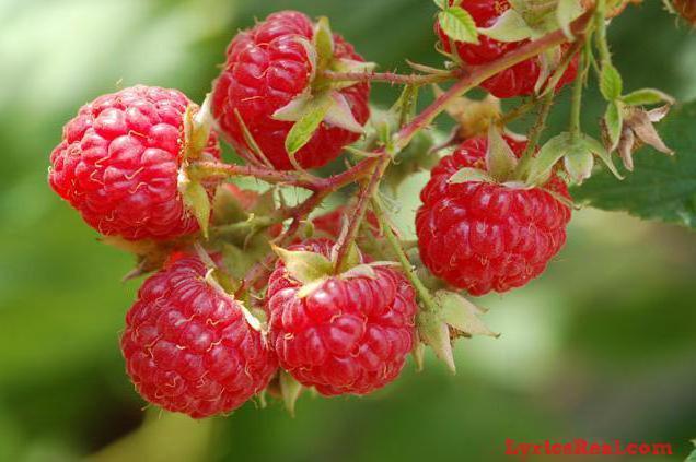 Малина, малина, фрукты, ягоды