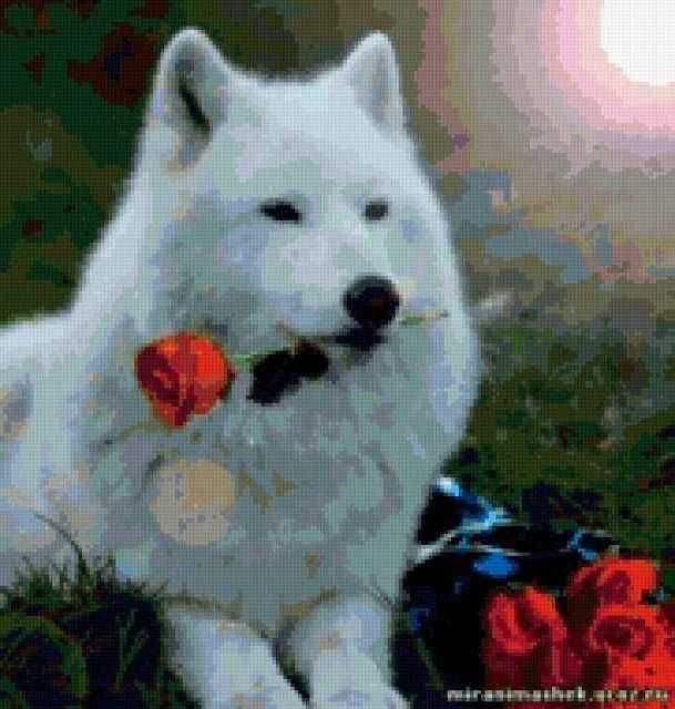 Белый волк, животные, волки