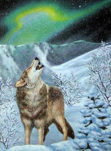 волк, северное сияние