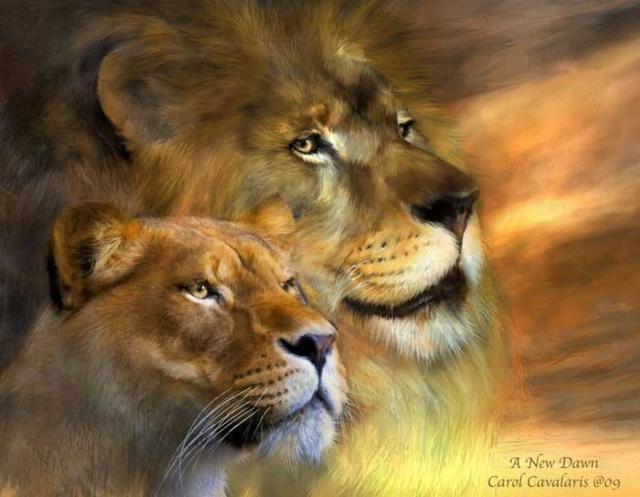 Львы., оригинал