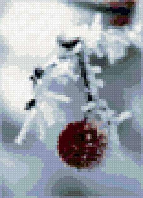 Вишня под снегом, предпросмотр