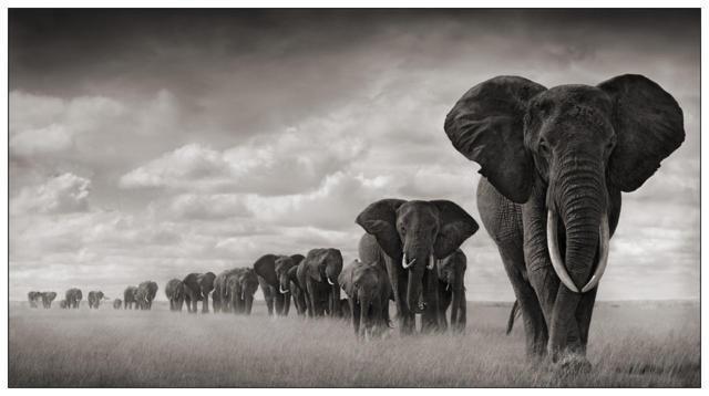 Слоны, слон, животные, пророда