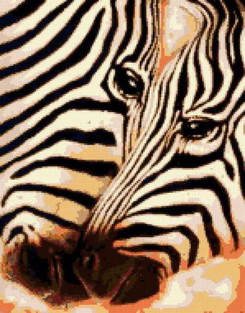 Две зебры, предпросмотр