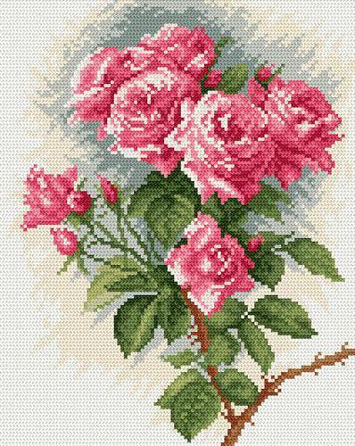 Яркие розы, цветок, роза,