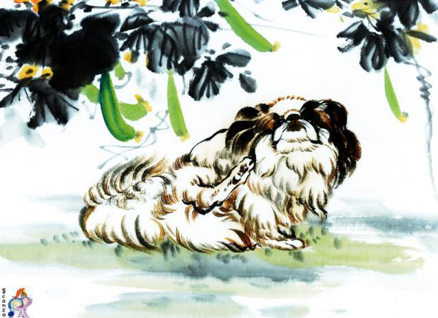 Пекинес, пекинес, собаки