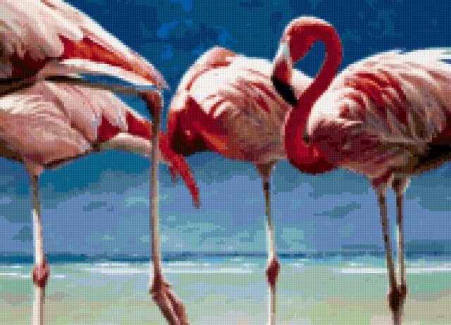 Фламинго, птицы