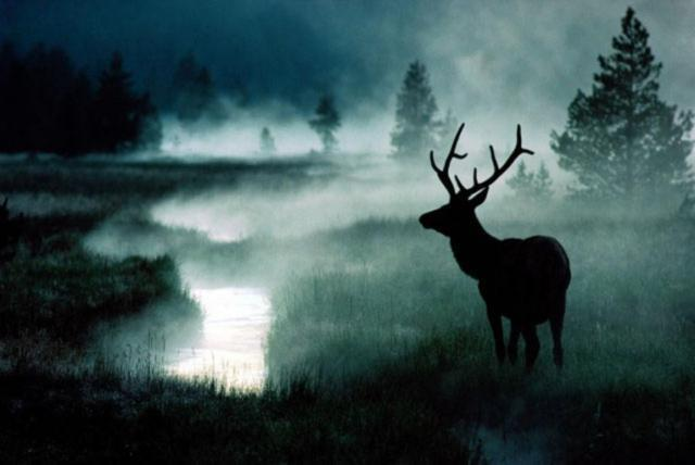 Картинки оленей на природе