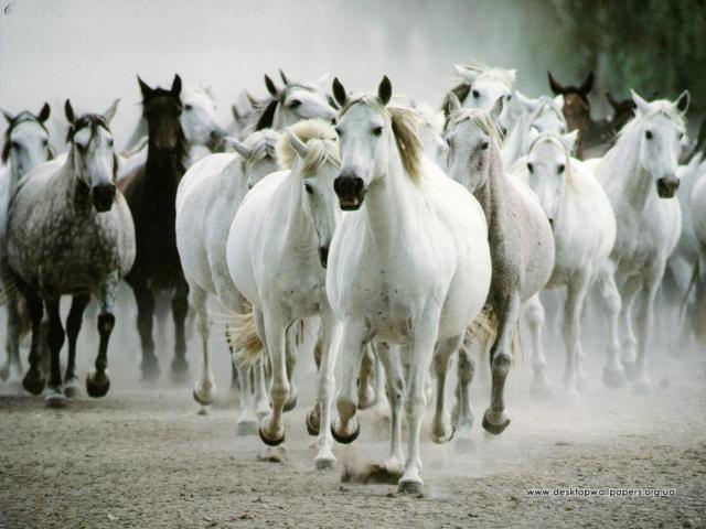 Стадо лошадей, оригинал