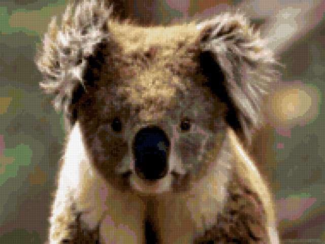 Koala, предпросмотр