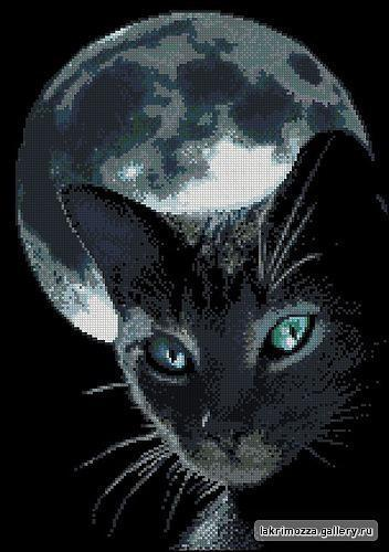 Лунный кот, животные, природа