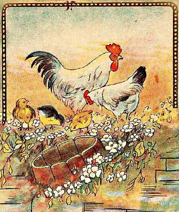 курица, цыплята, цыплёнок