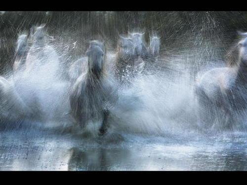 Стадо лошадей в воде, животные