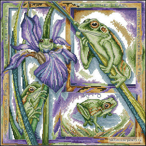 Ирис и лягушки, оригинал