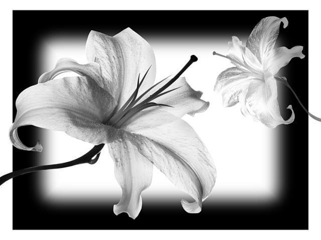 фото черно-белое цветов