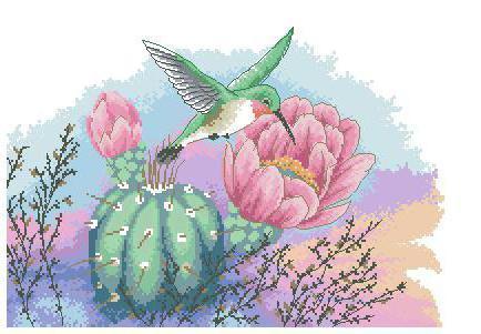 Колибри и кактус, оригинал
