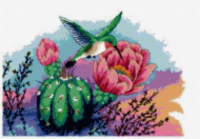 Колибри и кактус, предпросмотр