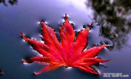 Осенний лист, оригинал