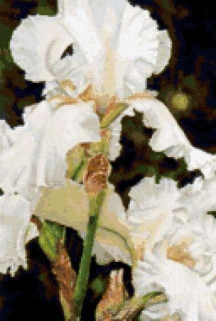 Белые ирисы, цветочное