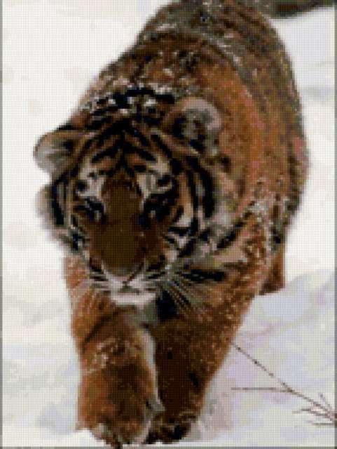 Тигр по снегу, предпросмотр