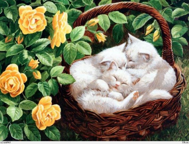 Спящие котята, котята, розы,
