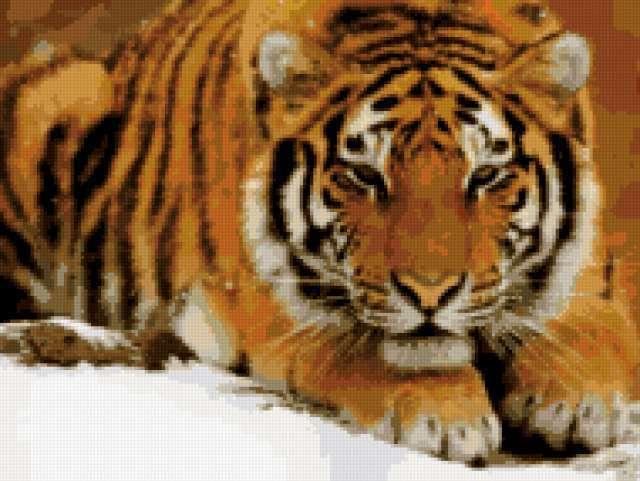 Тигр на снегу, предпросмотр