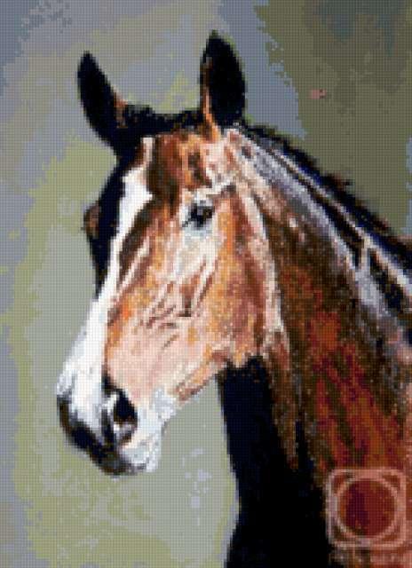 Голова лошади, животные