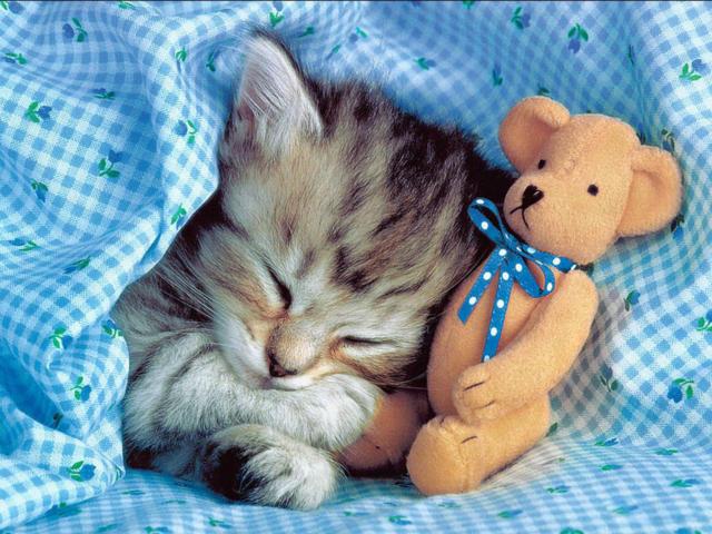 Котенок под одеялом, оригинал