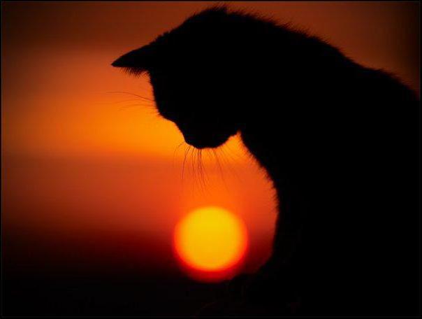 Черная кошка, закат, черная