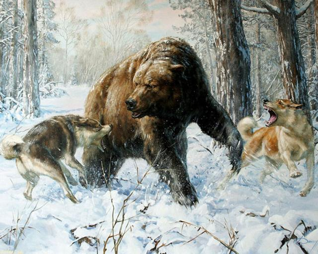 Медведь против собак, оригинал