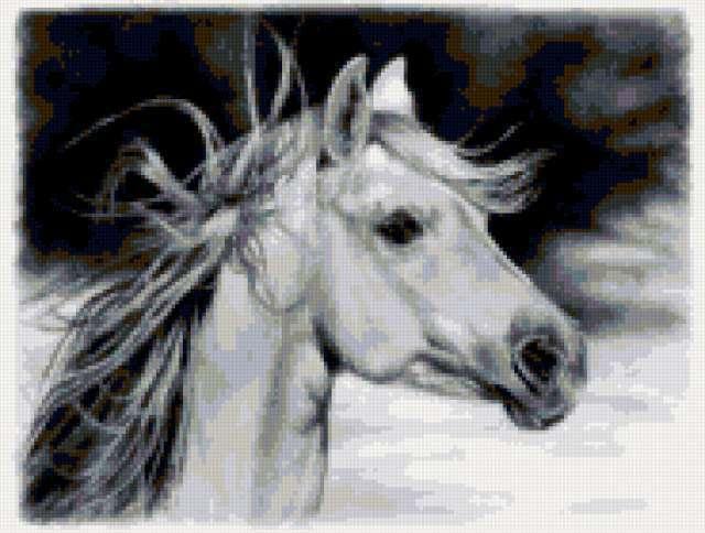 Черно-белое-лошадь