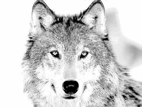 Волки черно белая вышивка