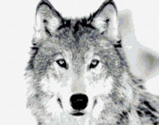 вышивки черно-белого волка схема