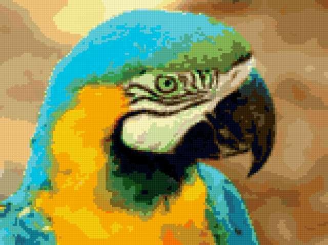 Попугай ара, предпросмотр
