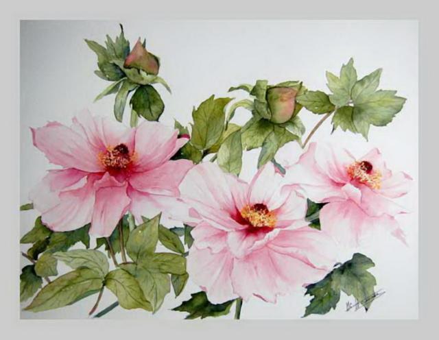 Шиповник, Цветы, роза