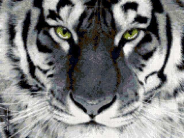 Морда тигра, предпросмотр