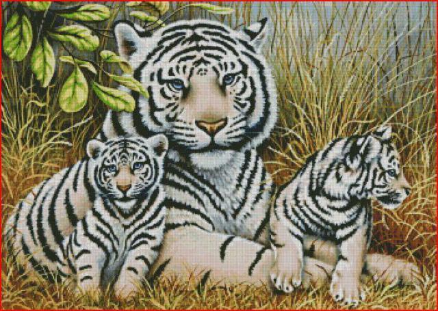 Семья белых тигров, оригинал