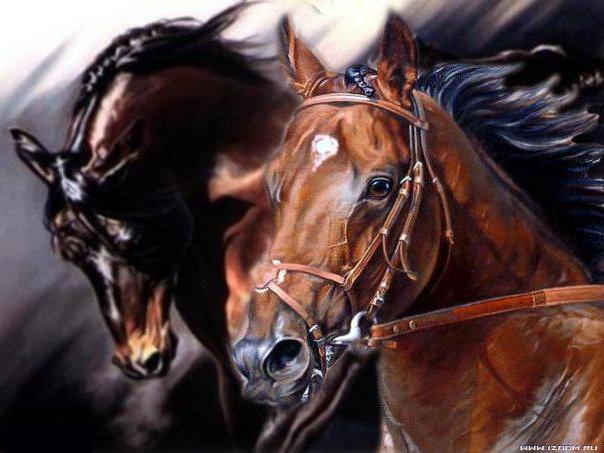 Лошади, лошадь, лошади, скачки