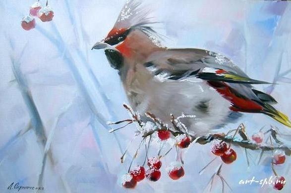 Свиристель, живопись, птицы