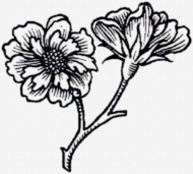 Ч-б цветы, предпросмотр