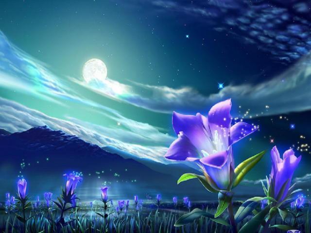 Волшебные цветы, цветы, ночь,