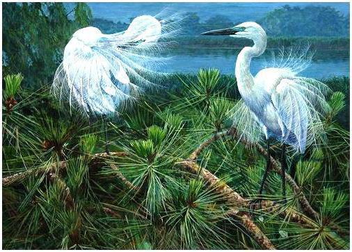 Белые цапли, природа, животные